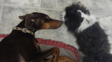 I'll watch over her mom. Kona taking care of her after her spay.